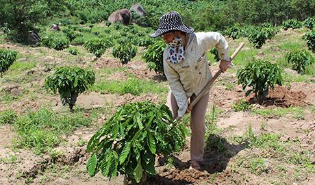 Đảng viên Nguyễn Thị Hải Yến làm kinh tế giỏi